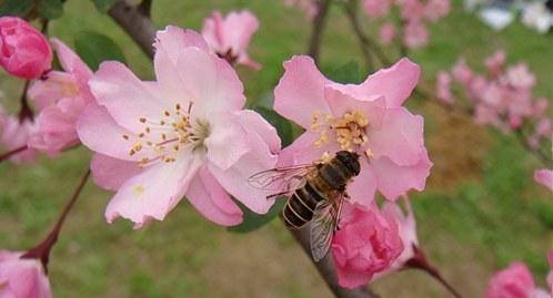 春天,你好(诗歌) - 深秋 - 深秋的故事的博客
