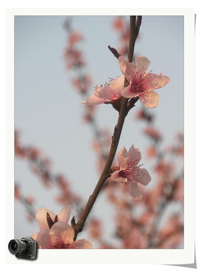 捕捉身边的春天(摄影组图) - 深秋 - 深秋的故事的博客