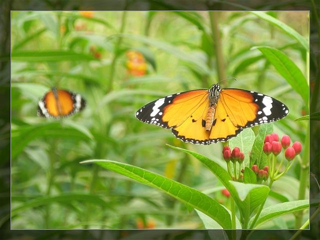 蝴蝶花园(原创摄影组图) - 深秋 - 深秋的故事的博客