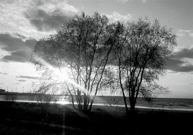 眼中的沙(诗歌) - 深秋 - 深秋的故事的博客