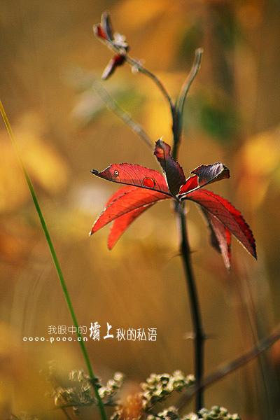 秋的私语(诗歌) - 深秋 - 深秋的故事的博客