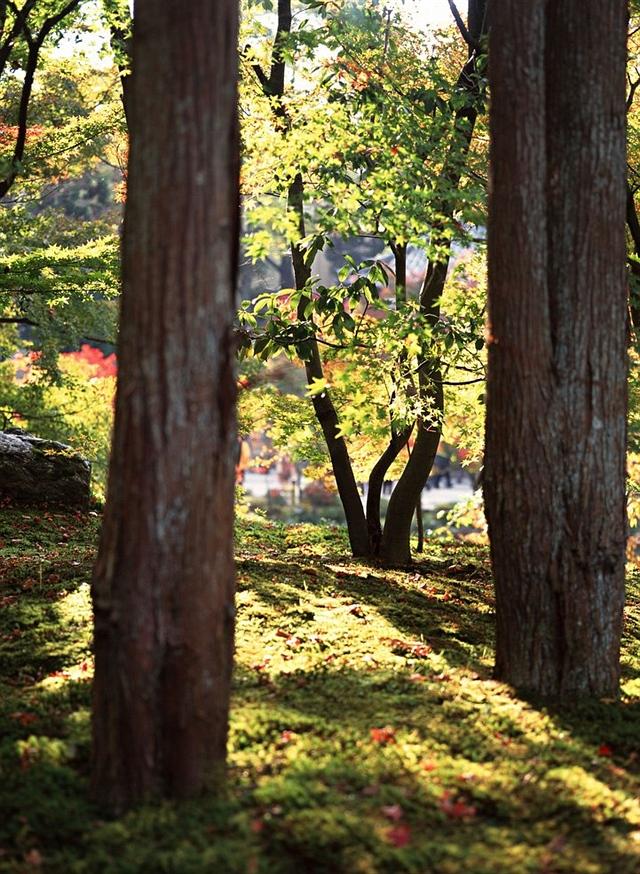 初冬的夕阳(诗歌) - 深秋 - 深秋的故事的博客